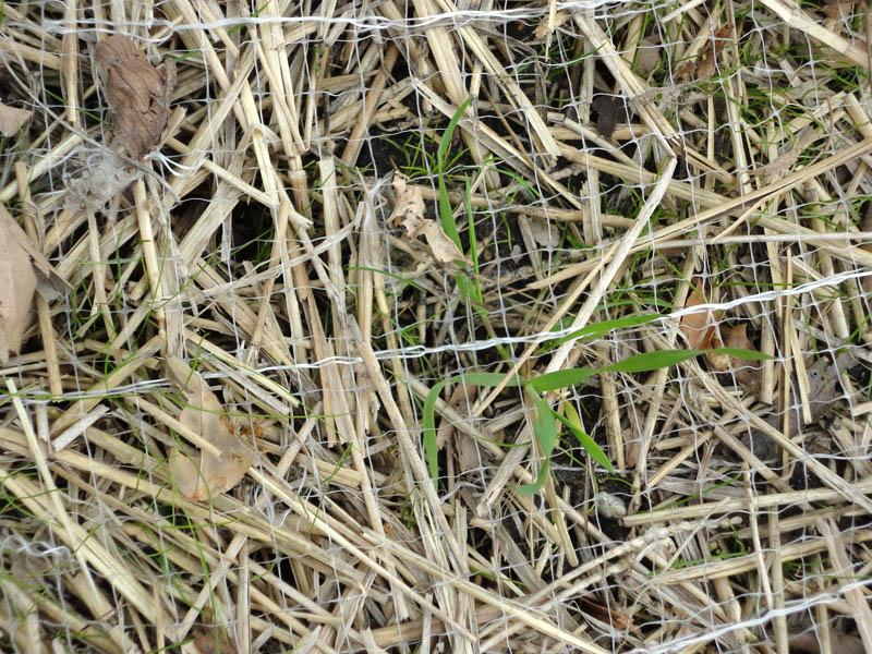 Red de manta de hierba