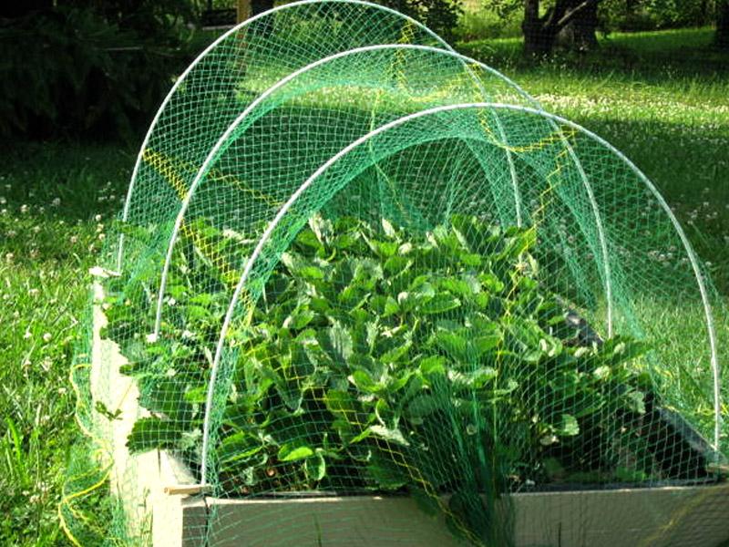 Valla de Protección de Verduras y Frutas