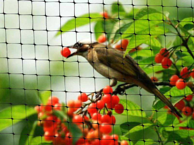 Red Anti-Pájaro