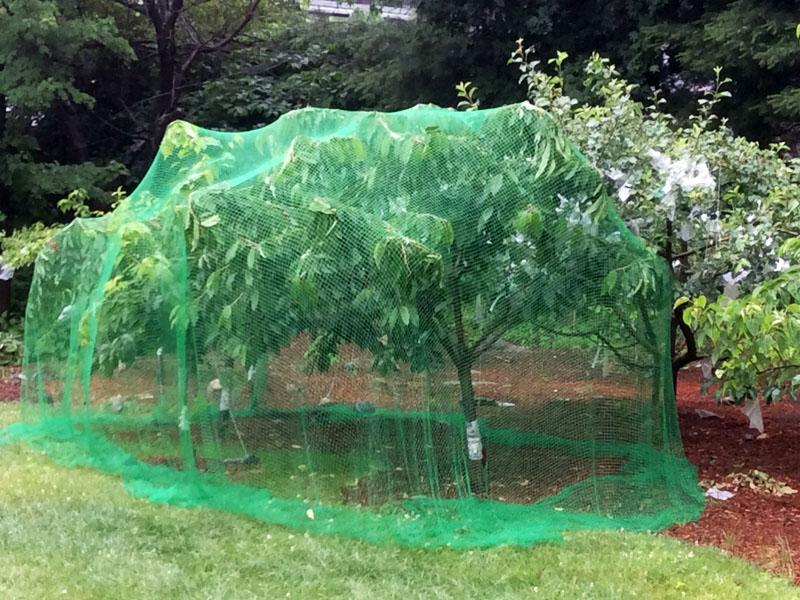 Red de Protección de Árboles